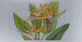 Exotic Flowers II