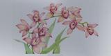 Exotic Flowers III