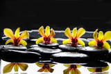 Still Life with Four Orchid with Stones on Water Drops