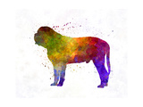 Mastiff in Watercolor