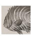 Vintage Fish II