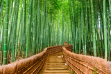 Kyoto  Japan at the Bamboo Forest