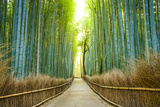 Kyoto  Japan Bamboo Forest