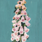 From My Garden - Foxglove