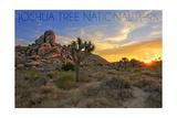 Joshua Tree National Park  California - Sunrise