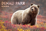 Denali Park  Alaska - Grizzly Bear and Colorful Meadow Flowers