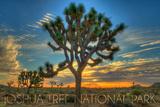 Joshua Tree National Park  California - Tree in Center