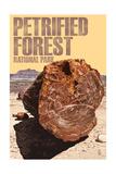 Petrified Forest National Park  Arizona - Petrified Wood Close Up