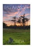 Tallahassee  Florida - Cypress and Sunset