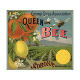 Queen Bee Brand - Corona  California - Citrus Crate Label