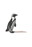 Black-Footed Penguin - Icon