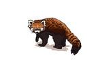 Red Panda - Icon