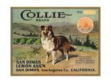 Collie Brand - San Dimas  California - Citrus Crate Label