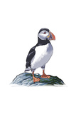 Puffin - Icon