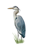 Blue Heron - Icon