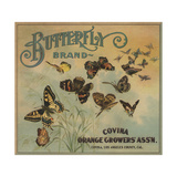 Butterfly Brand - Covina  California - Citrus Crate Label