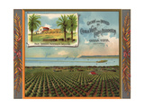 San Diego Mission Brand - Chula Vista  California - Citrus Crate Label