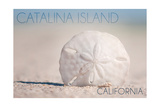 Catalina Island  California - Sand Dollar on Beach