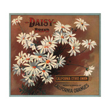 Daisy Brand - California - Citrus Crate Label