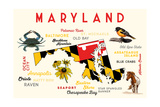 Maryland - Typography and Icons with Black Eyed Susans