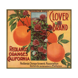 Clover Brand - Redlands  California - Citrus Crate Label