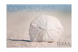 Corpus Christi  Texas - Sand Dollar and Beach