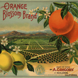 Orange Blossom Brand - Redlands  California - Citrus Crate Label