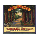 Yosemite Brand - Ivanhoe  California - Citrus Crate Label