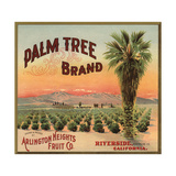 Palm Tree Brand - Riverside  California - Citrus Crate Label
