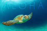 Sea Turtle Swimming - Aloha