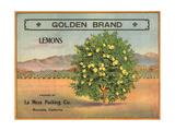 Golden Brand - Riverside  California - Citrus Crate Label