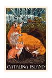 Catalina Island  California - Fox and Kit