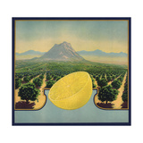 Grapefruit and Orchard - Citrus Crate Label