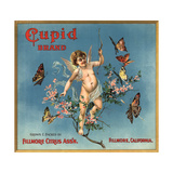 Cupid Brand - Fillmore  California - Citrus Crate Label
