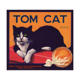 Tom Cat Brand - Orosi  California - Citrus Crate Label