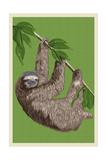 Three Toed Sloth - Letterpress