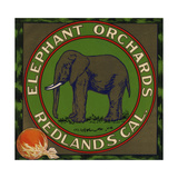 Elephant Orchards Brand - Redlands  California - Citrus Crate Label