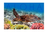 Sea Turtle and Coral - Aloha