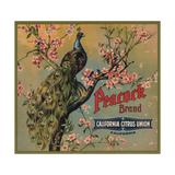 Peacock Brand - California - Citrus Crate Label