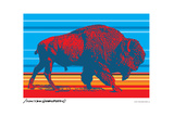 Native Buffalo - John Van Hamersveld Poster Artwork