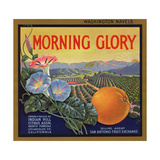 Morning Glory Brand - Pomona  California - Citrus Crate Label