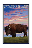 Catalina Island  California - Bison and Sunset
