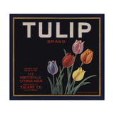Tulip Brand - Porterville  California - Citrus Crate Label