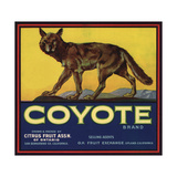 Coyote Brand - Upland  California - Citrus Crate Label