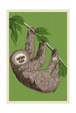 Two Toed Sloth - Letterpress