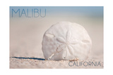Malibu  California - Sand Dollar and Beach