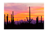 Sunset and Cactus Photograph