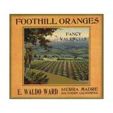 Foothill Oranges Brand - Sierra Madre  California - Citrus Crate Label