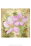 Vintage Apple Blossom I