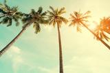 Vintage Nature Photo of Coconut Palm Tree in Seaside Tropical Coast Reproduction d'art par Jakkapan